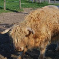 Highland Mum.jpg