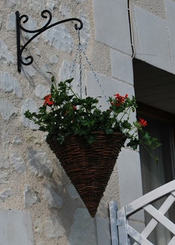 Hanging basket cropped (2)