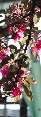 nature - bloom.jpg