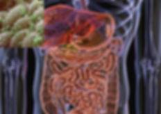 Flora-bakteryjna-jelita