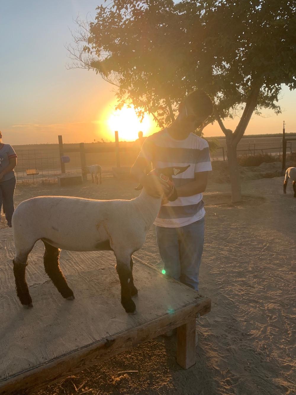 Nick Gutierrez and his lamb