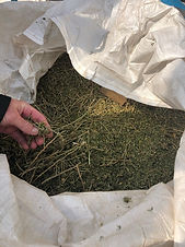 Farmer hemp biomass