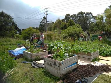 Organic Garden, Auckland New Zealand.