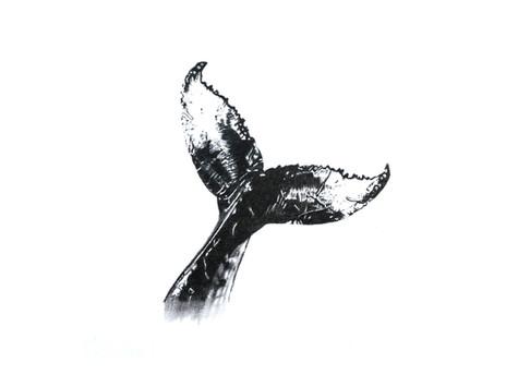 CHER ANIMAL - Chère baleine