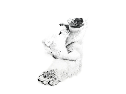 CHER ANIMAL - Cher ours blanc