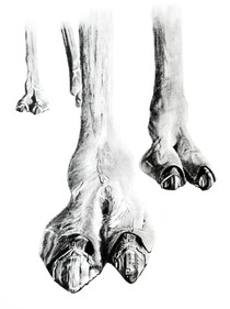 CHER ANIMAL - Cher chameau