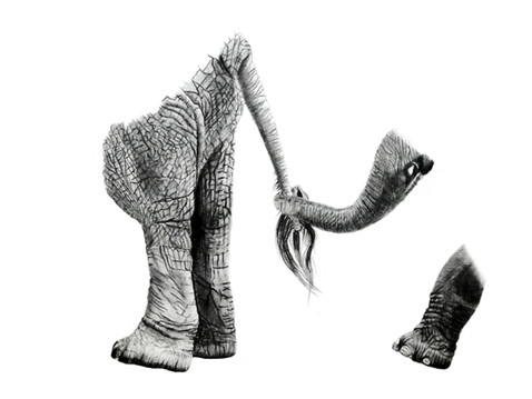 CHER ANIMAL - Cher éléphant