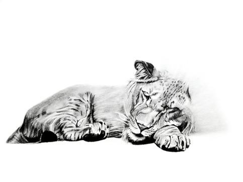 CHER ANIMAL - Cher lion