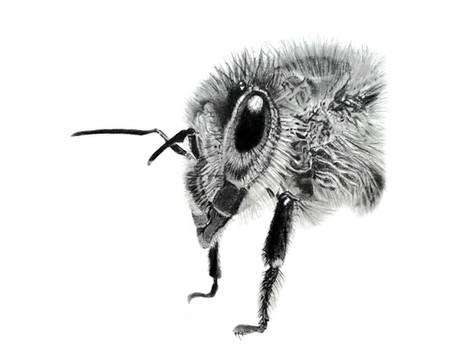 CHER ANIMAL - Chère abeille