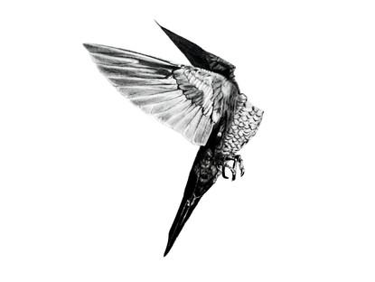 CHER ANIMAL - Cher colibri