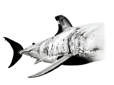 CHER ANIMAL - Cher requin