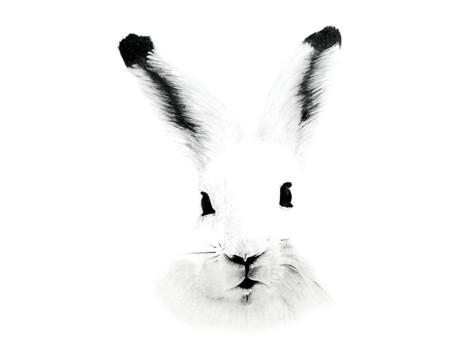 CHER ANIMAL - Cher lièvre