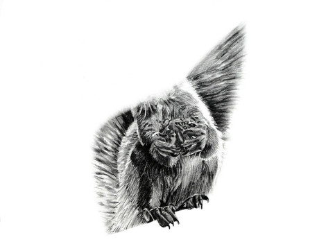 CHER ANIMAL - Cher écureuil