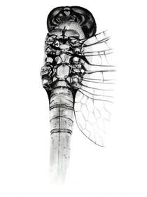 CHER ANIMAL - Chère libellule