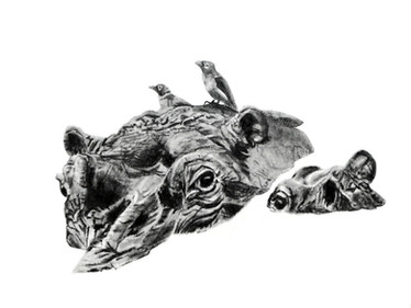 CHER ANIMAL - Cher hippopotame