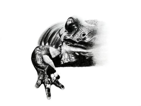 CHER ANIMAL - Chère salamandre
