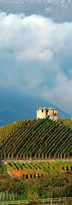 viticoltura_Aymavilles.jpg