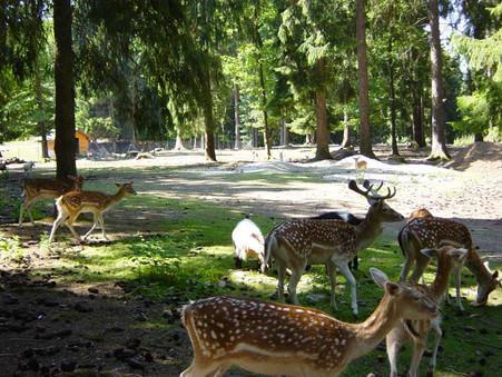 Parc Animalier.jpg