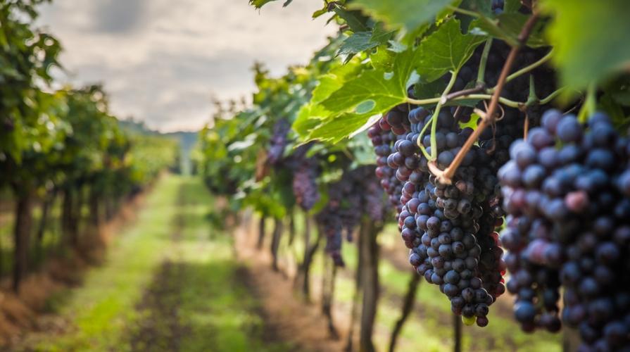 vini-valdostani