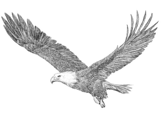 Eagles in Flight, my second novel.