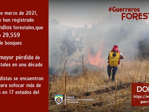 #GuerrerosForestales: Primera línea de defensa