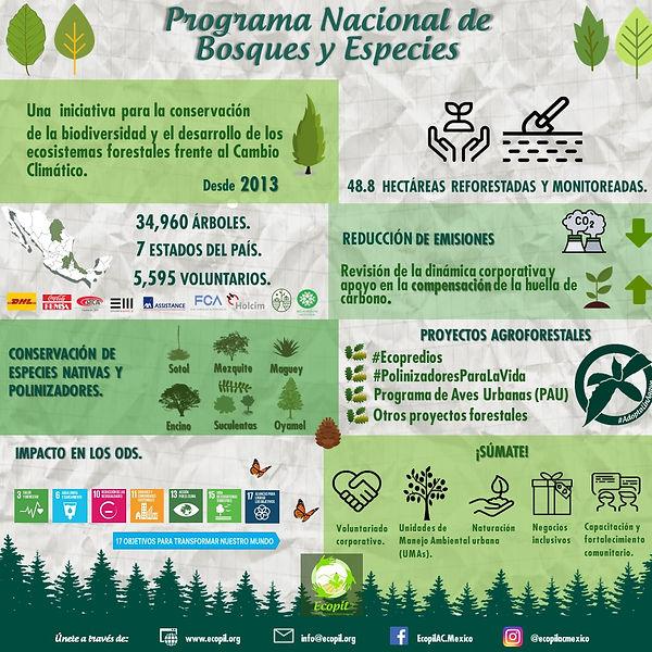 Infografía-Bosques y Especies Ecopil 202