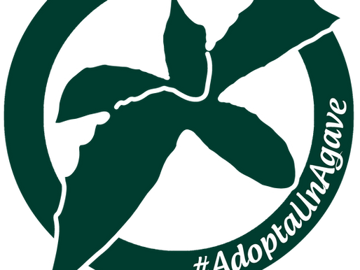 #AdoptaUnAgave, la importancia de conservar la biodiversidad.