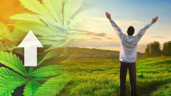 Cannabis Users are More Successful