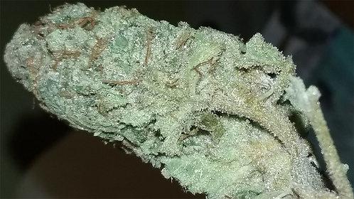 Blue Hash Plant Hybrid 19.00%