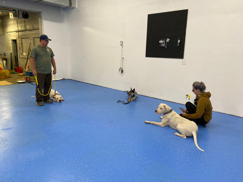 Dogs at Tri Canine Campus.jpg