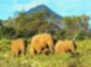 kenya-306x226.jpg