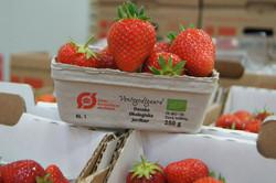 Økologiske jordbær