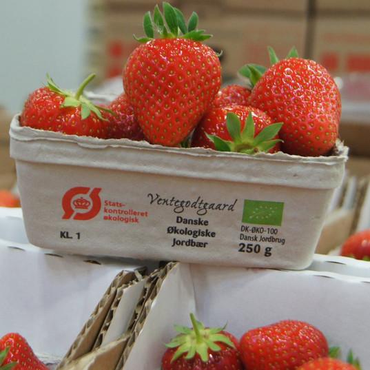 Øko jordbær