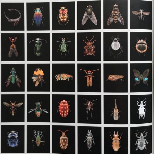 Levon Biss, Microsculpture