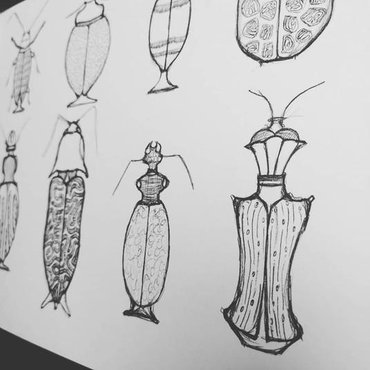 Beetle bottle sketches