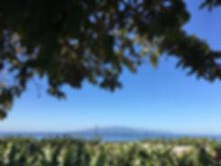 Tenerife Ocean.jpg