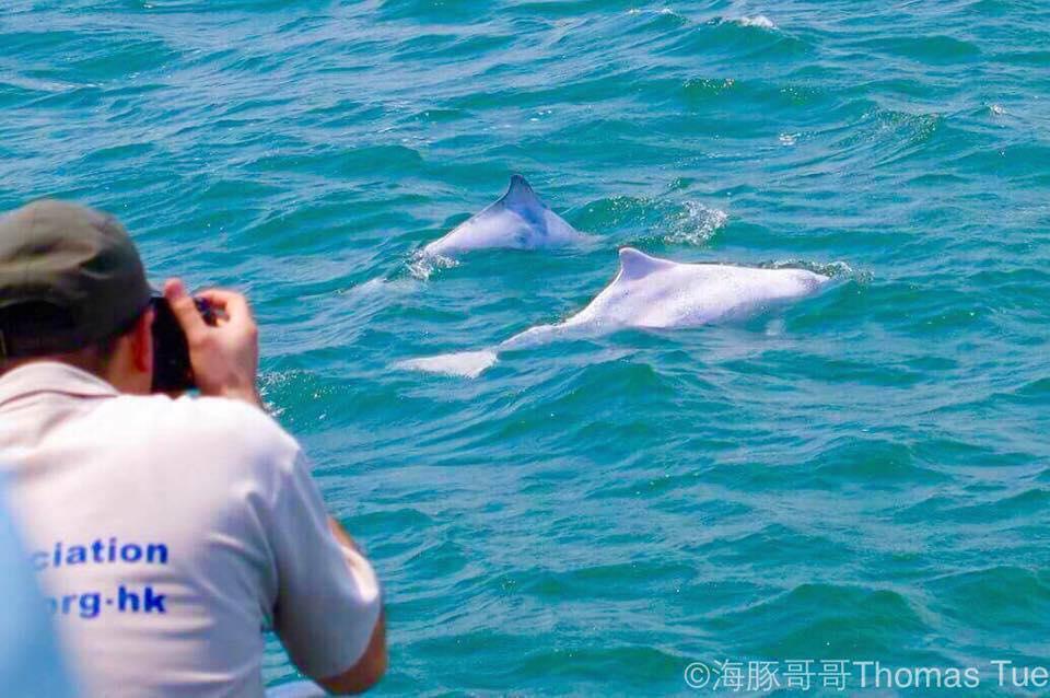 中華白海豚大澳