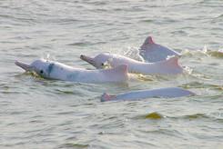 eco_cwd_dolphins_030129_1152.jpg