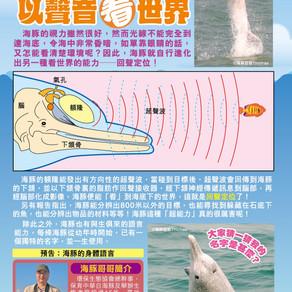 中華白海豚以聲音看世界
