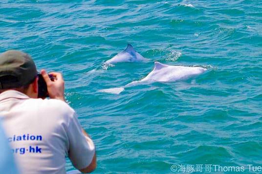 eco_sch_dolphin_8609.jpg