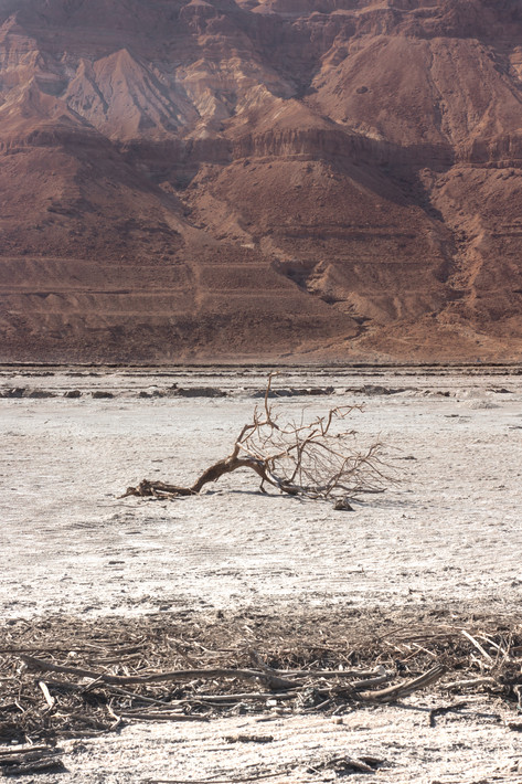 Israeli Desert V