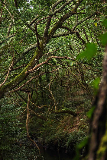 Forest landscapephotography