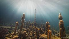 Peter Stetina, Freedive, Freediving, Freitauchen, Apnoe, Anaerobic Art, Unterwasserfotografie, Freedive Kärnten, Wörthersee