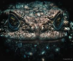 Peter Stetina, Freedive, Freediving, Freitauchen, Apnoe, Anaerobic Art, Unterwasserfotografie, Freedive Kärnten, Längsee, Kröte