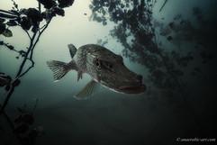 Peter Stetina, Freedive, Freediving, Freitauchen, Apnoe, Anaerobic Art, Unterwasserfotografie, Freedive Kärnten, Kloppeinersee, Hecht