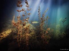 Peter Stetina, Freedive, Freediving, Freitauchen, Apnoe, Anaerobic Art, Unterwasserfotografie, Heimische Seen, Millstätter See, Kärnten, Hecht
