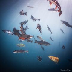 Peter Stetina, Freedive, Freediving, Freitauchen, Apnoe, Anaerobic Art, Unterwasserfotografie, Freedive Kärnten, Grüblsee