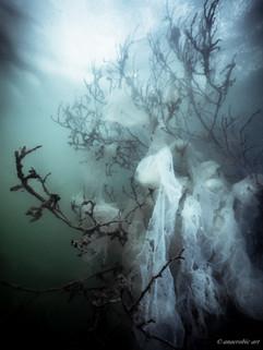 Peter Stetina, Freedive, Freediving, Freitauchen, Apnoe, Anaerobic Art, Unterwasserfotografie, Freedive Kärnten, Längsee, Fischlaich