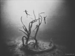 Peter Stetina, Freedive, Freediving, Freitauchen, Apnoe, Anaerobic Art, Unterwasserfotografie
