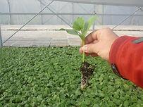 plantinesdehortalizas-viverodehortalizas